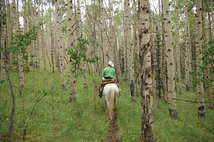 horseback riding vacation riding into aspen forest