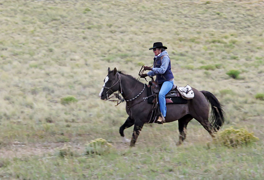 Trotting horse with a rider
