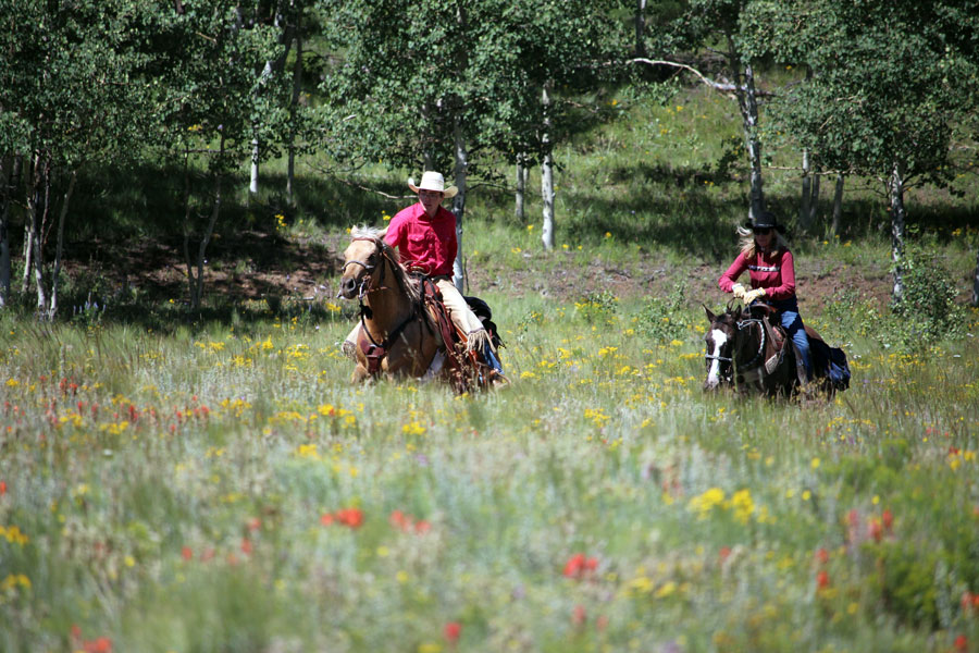 Two horseback riders trotting through a meadow with yellow and red flowers in the foreground