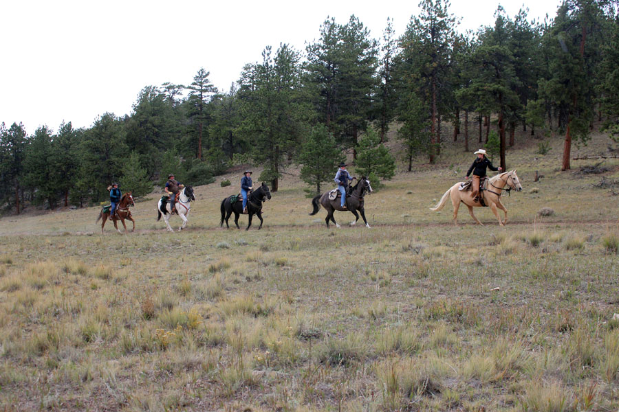 Five horseback riders on the trail